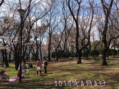 北習志野近隣桜02