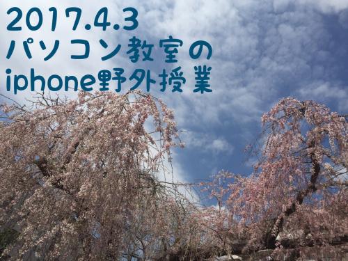 三街区の桜03