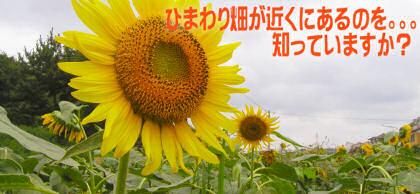 ひまわり畑のタイトルロゴ